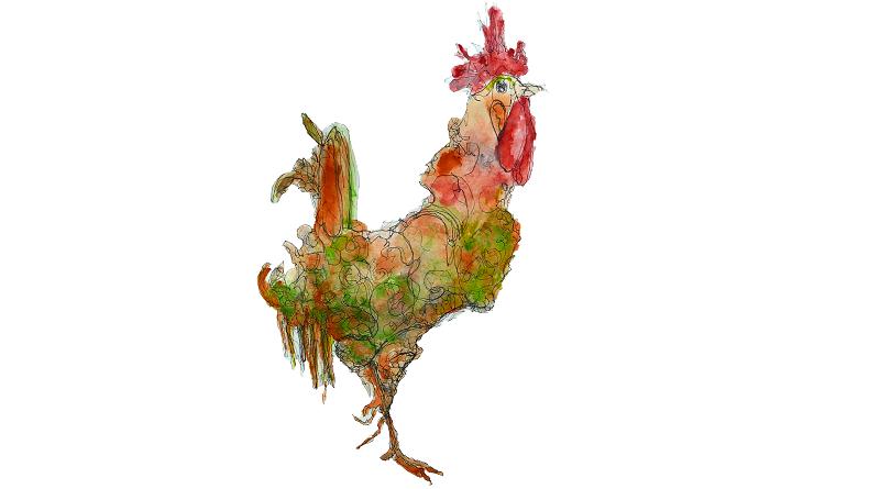 Mal wieder: Der Hahn auf der Ente